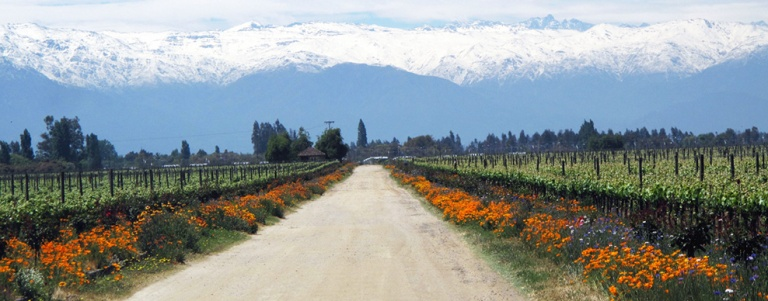 Maipo-Valley.-CREDITOMaipo-Valley-Courtesy-of-De-Martino-winery1